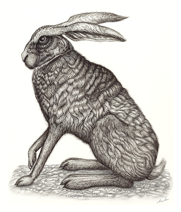 Hare-II-web2.png (600×705)