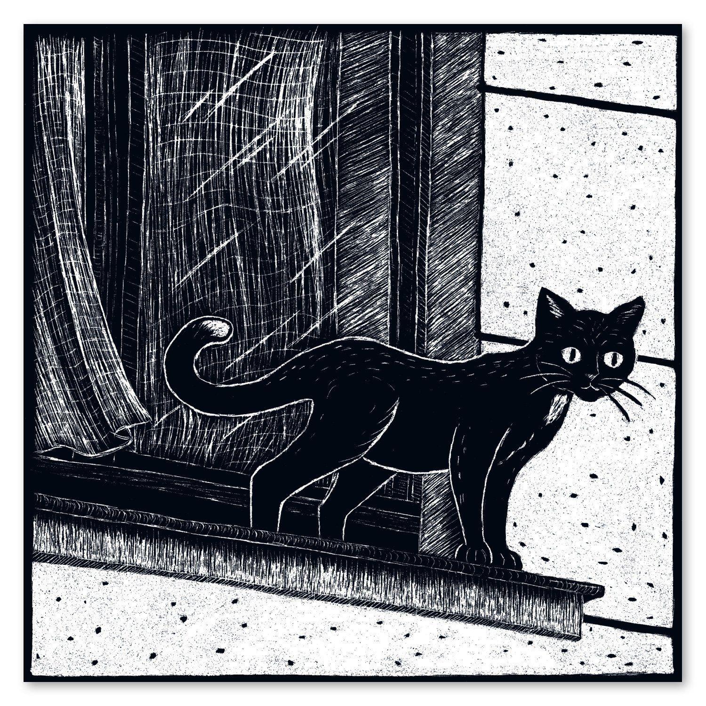 Illustrierte Katzen Postkarte Schwarzweiss Karte Mit Katze