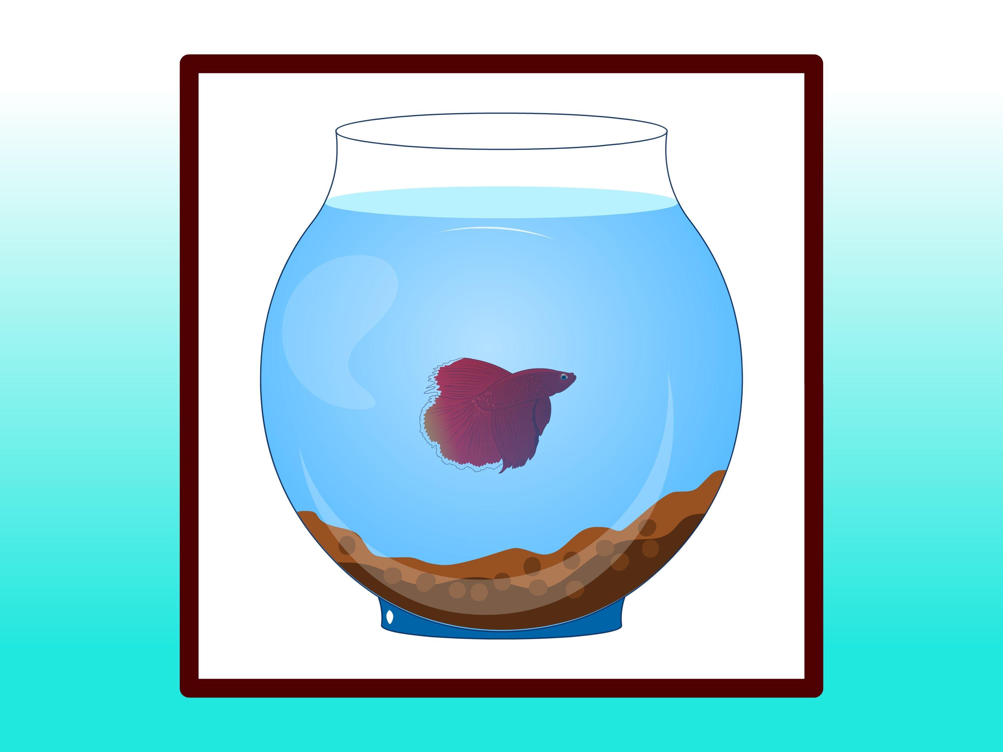 How to Clean a Betta Fish Tank Betta fish, Betta fish