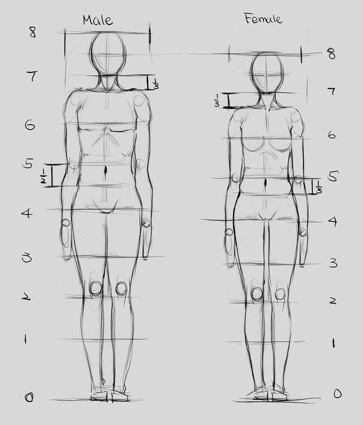 PROPORTIONS PROPORTIONS OF MALE AND FEMALE FIGURES ARE ...