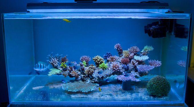 Leonardo's Apogon Reef