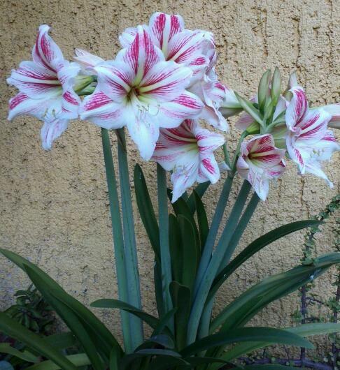 de mi jardín !