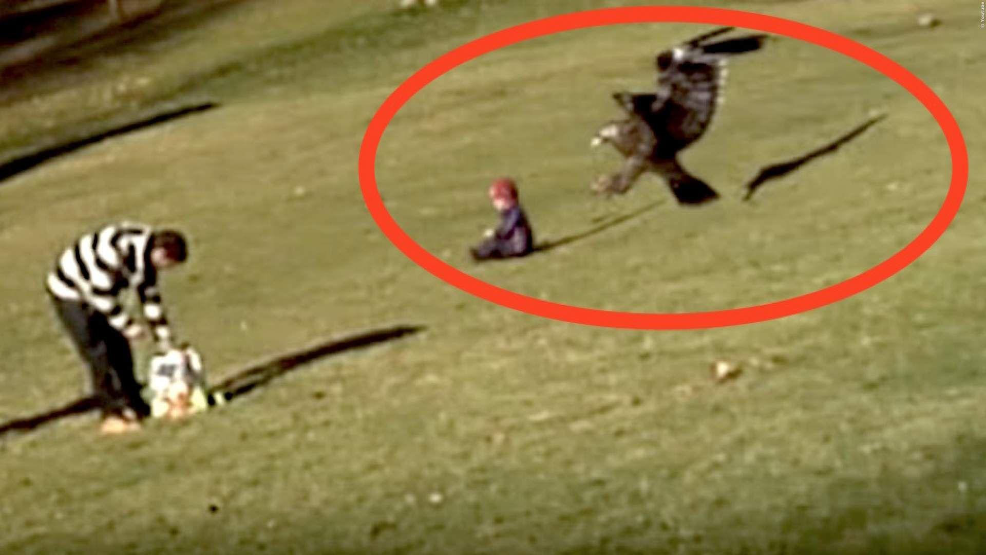 VIDEO: Riesiger Adler schnappt sich Kind, während der ...