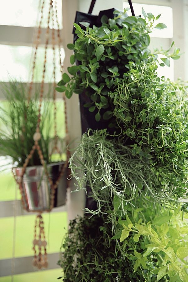 herb bag