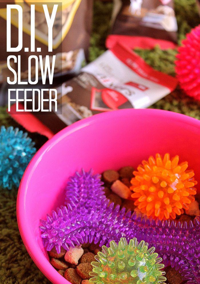 D I Y Slow Feeder Pet Bowl Raw Boost Mixers Diy Slow