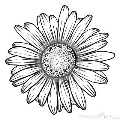 Gerbera Daisy Drawing Daisy Tattoo Daisy Drawing Daisy Flower