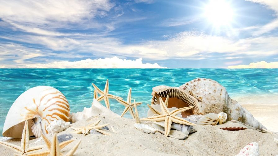 Seashell Android Hd Free Download Wallpapers Beach Wallpaper