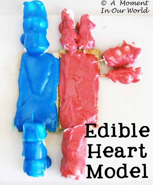 Human Body: Heart, Blood and Circulatory System - Simple Living. Creative Learning