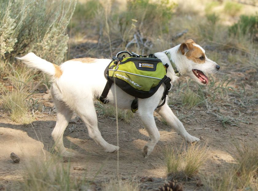 Approach Pack™ Dog Pack – Backpacking Adventure Pack for Canine Hikes -  from Ruff Wear 4a02e95d9f214