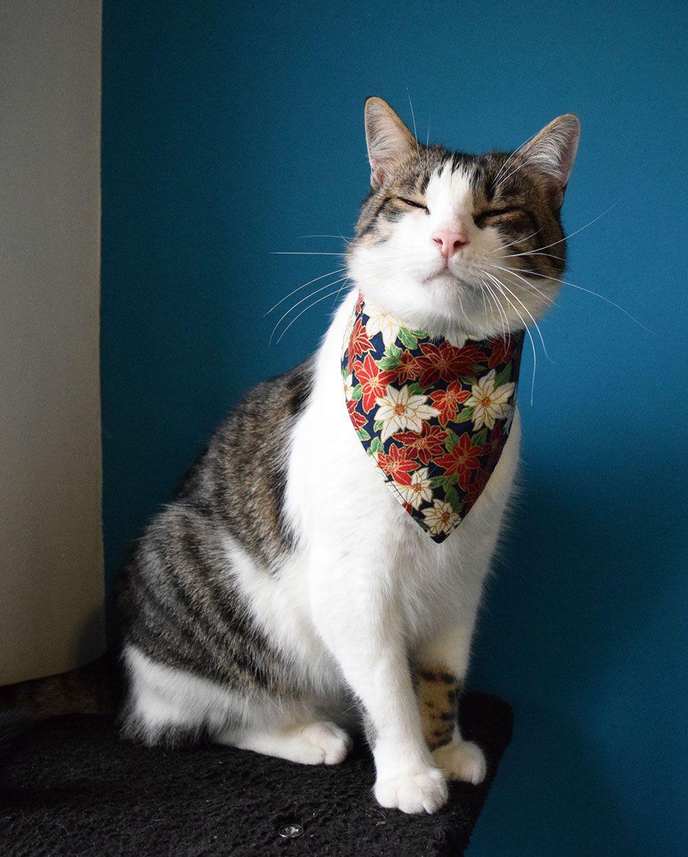 Handmade cat bandana with Christmas flower print.