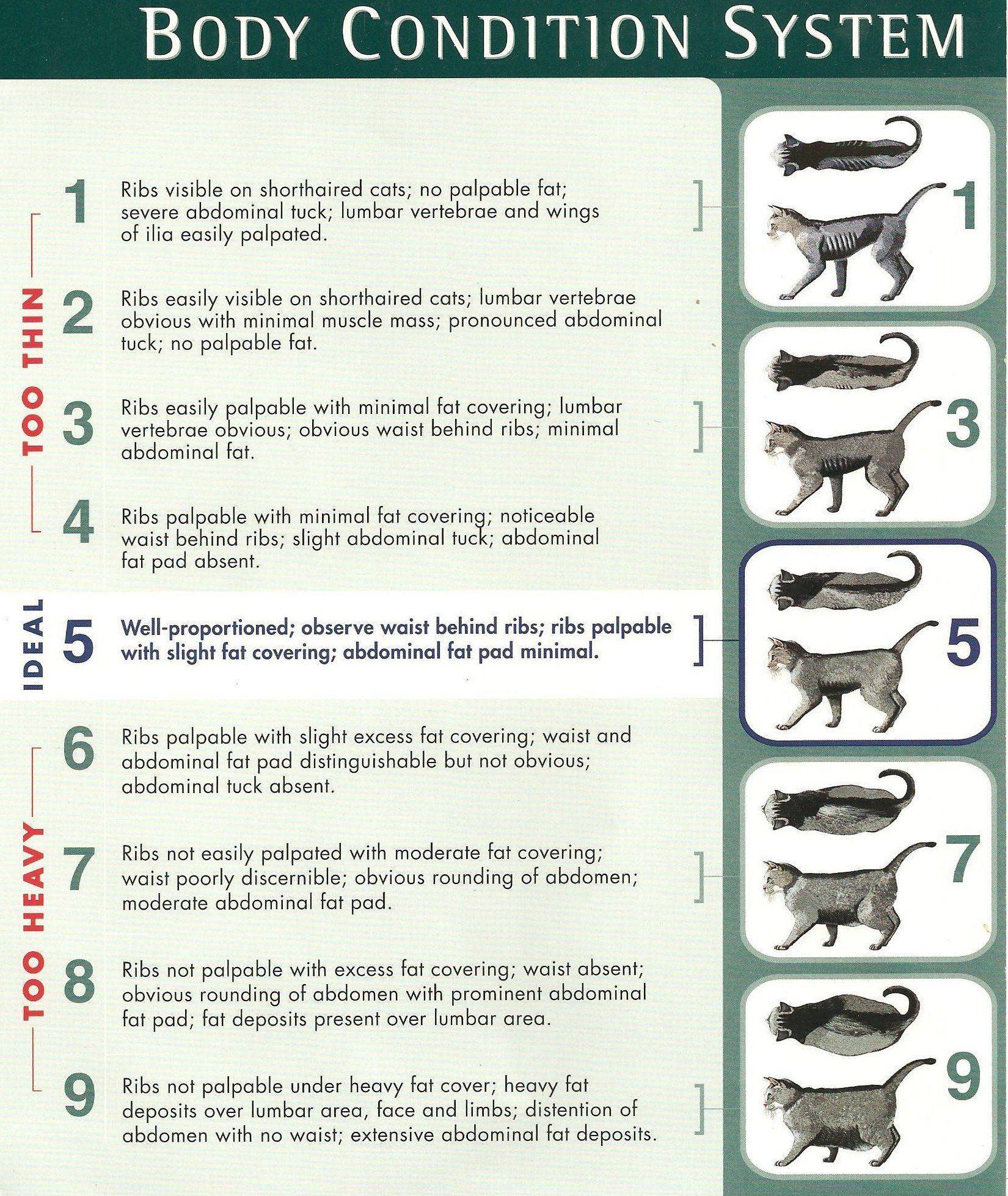nestle purina cat body condition chart