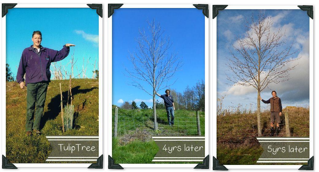 How to plant trees trees to plant tree plants
