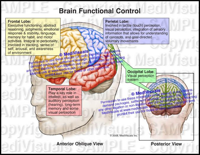 Brain Functional Control Views Of Brain With The Lobes Of The