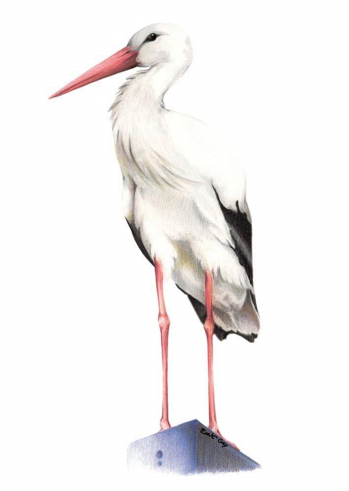 Eva Gey Ilustración: enero 2010