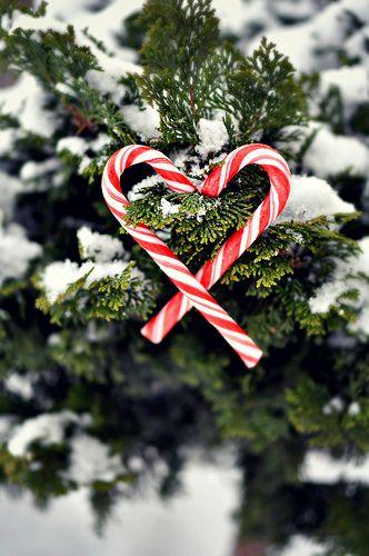 12/16:365~Christmas Love