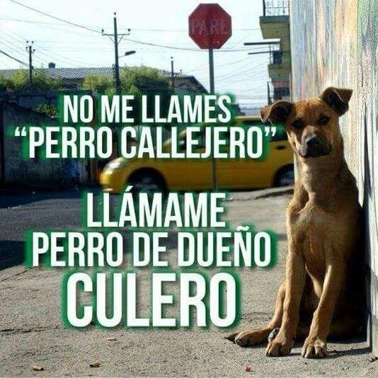 No me llames perro callejero