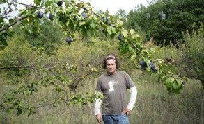 Producteurs de prunes en Drôme !