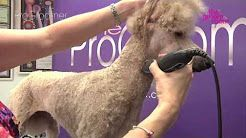 History Youtube Poodle Grooming Standard Poodle Grooming Standard Poodle