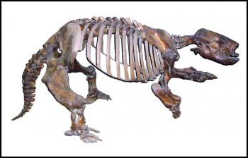 complete skeleton of a harlans ground sloth paramylodon harlani recovered from the rancho la