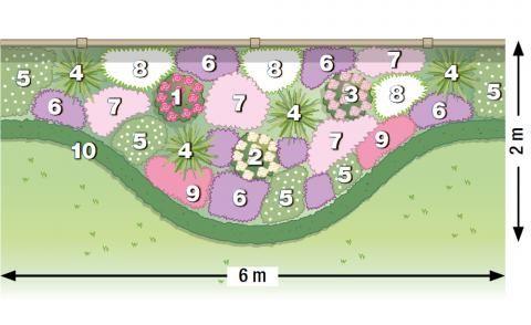 zum nachpflanzen rosen und stauden gekonnt kombiniert pflanzplan staudenbeet und rose. Black Bedroom Furniture Sets. Home Design Ideas