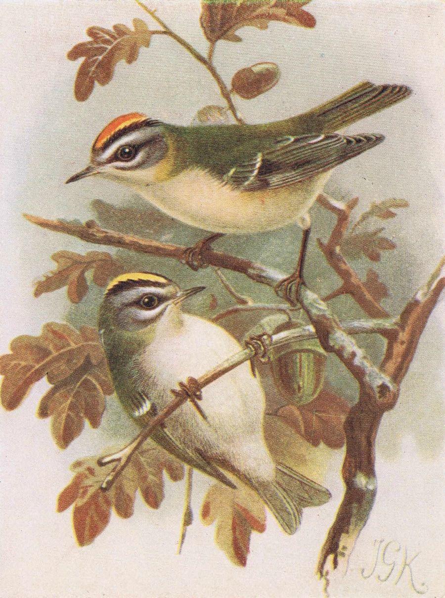 Set Of 2 Antique Bird Prints Birds In Autumn Bird Prints