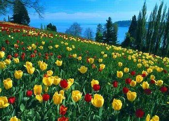Taman Bunga Tulip Bandung