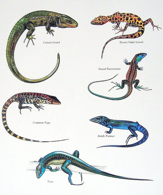 Reptiles | Jehovah's C...