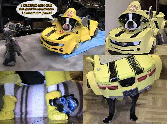 boston terrier halloween costume ideas - Halloween Costumes In Boston