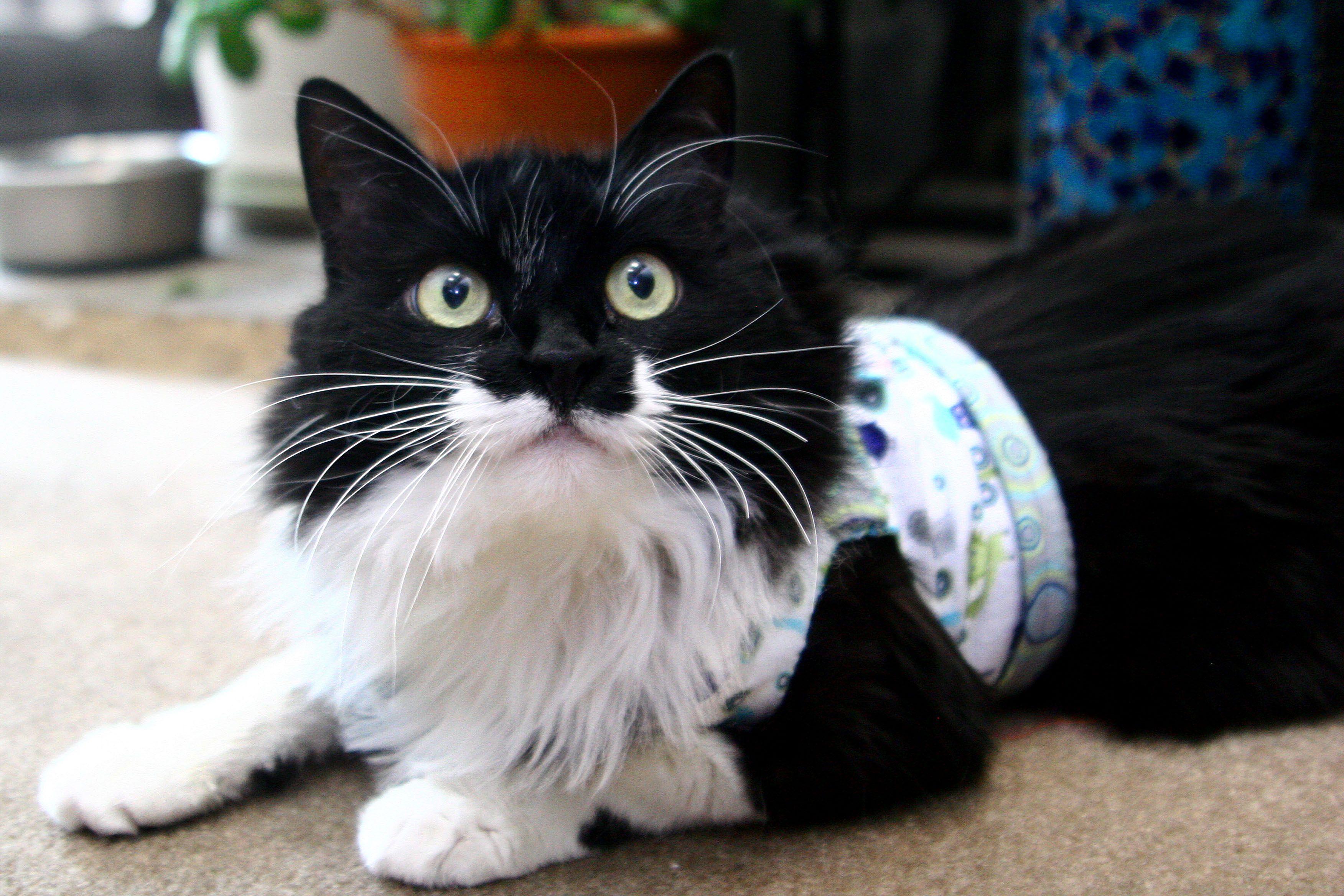 Homemade Cat Harness Cuteness Cat Harness Kitten Harness Cat Training