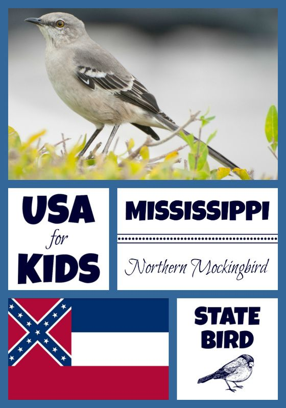 Mississippi State Bird Coloring Pages And Activity Sheets