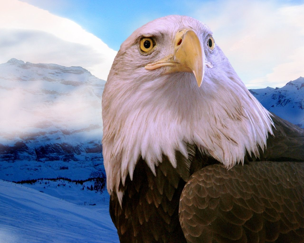 Free Bald Eagle Wallpapers Wallpaper Adorable Wallpapers