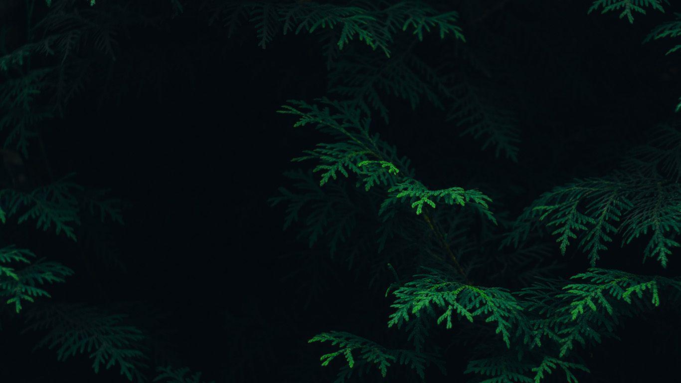 Wallpaper Http Desktoppapers Co Vs89 Tree Leaf Green Pattern Nature Dark Via Http Desktoppapers Co Vs89 Nature Wallpaper Dark Wallpaper Plant Wallpaper