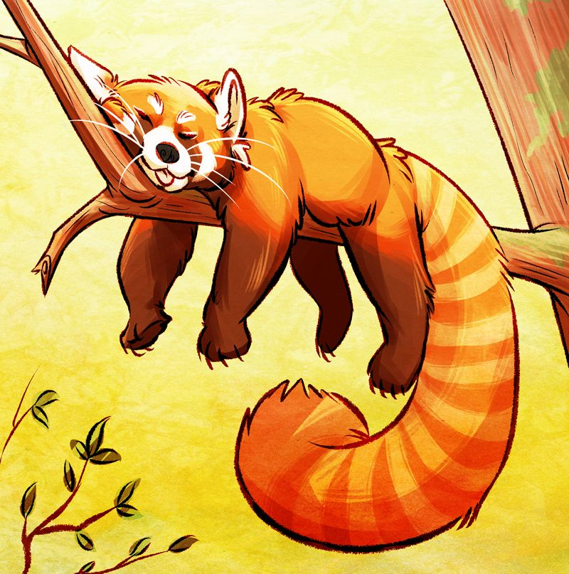 red panda by unbadger on DeviantArt