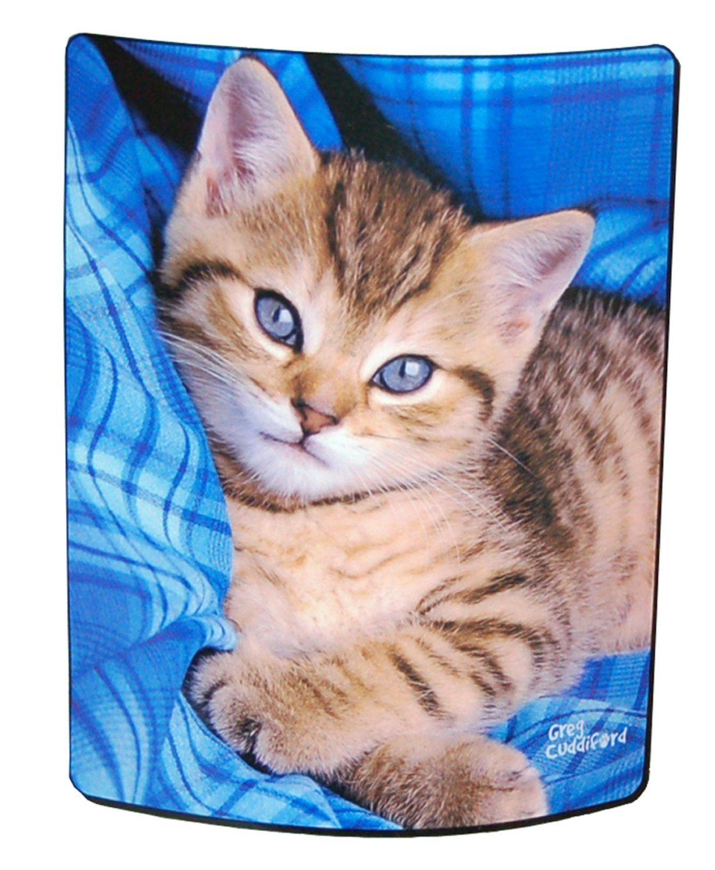 Amazon Com Blue Eyed Kitten Royal Plush Raschel Throw Blanket 50 X 60 Kittens Cutest Kitten Kittens Funny