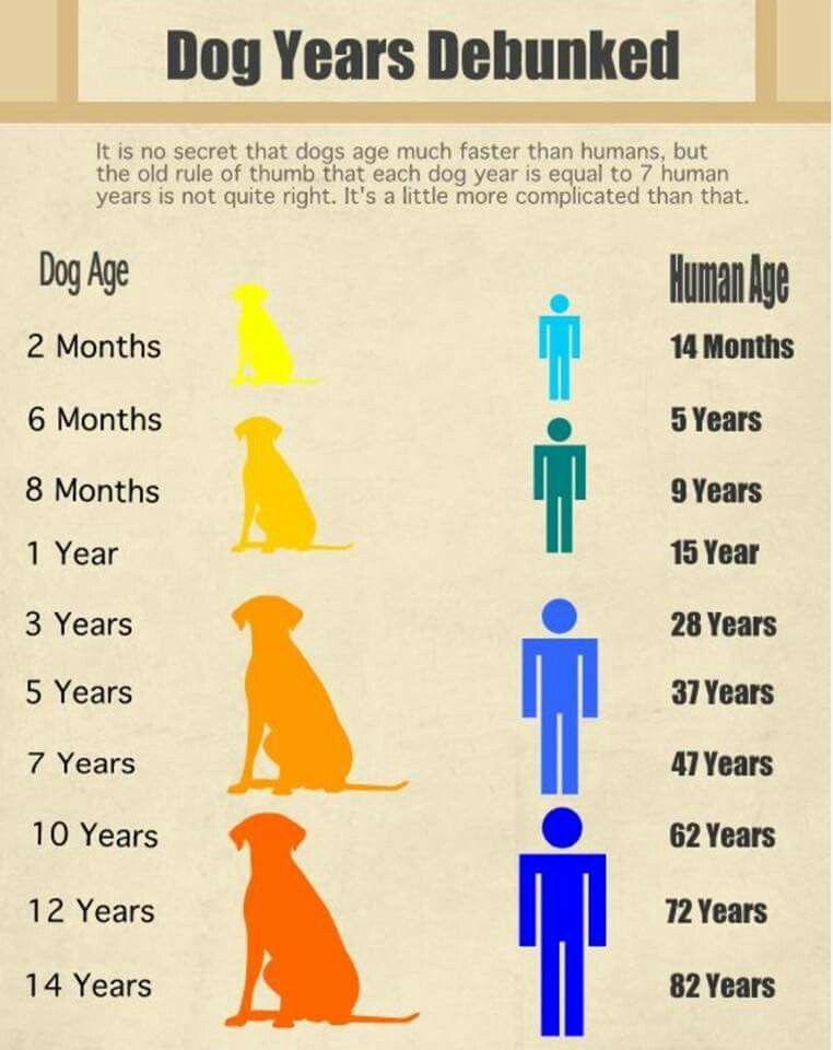 Dog years dog years dog care dog ages
