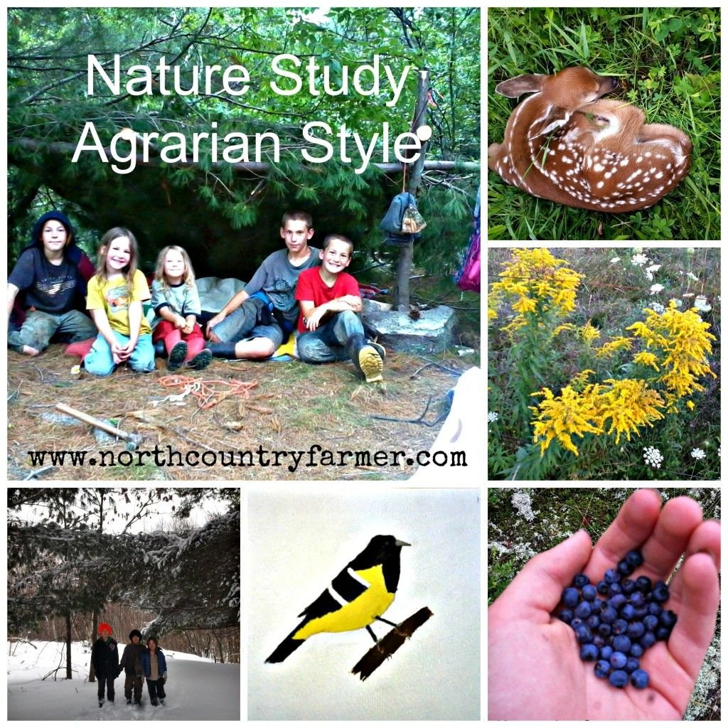 Homeschool Nature Study...Agrarian Style