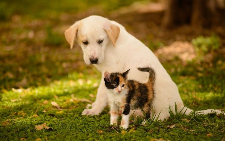 Cat Dog In Summer Hd Wallpaper Cute Puppy Wallpaper Kittens And Puppies Cute Cats And Dogs
