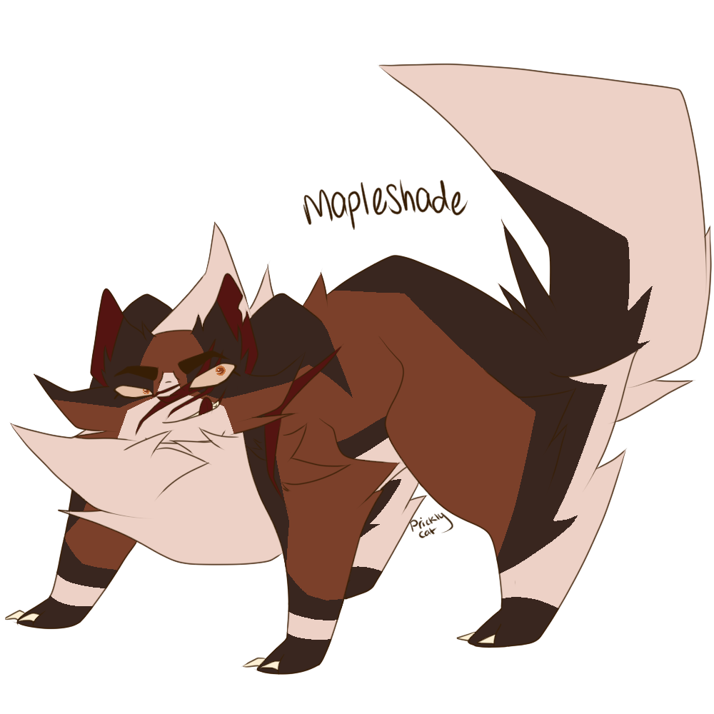 Mapleshade With Images Cool Drawings Warrior Cats Cat Design