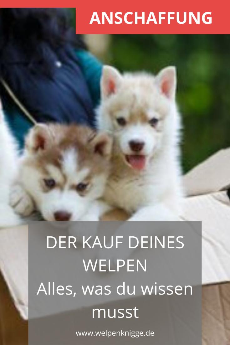 Hundewelpen Kaufen Darauf Solltest Du Im Vorfeld Achten In 2020