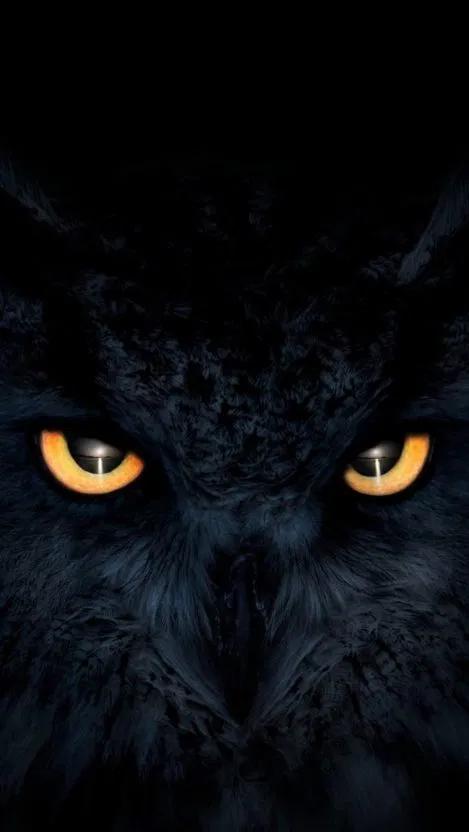 Owl Dark Glowing Eyes Iphone Wallpaper Free Free Pik Psd Owl Wallpaper Eyes Wallpaper Owl Wallpaper Iphone