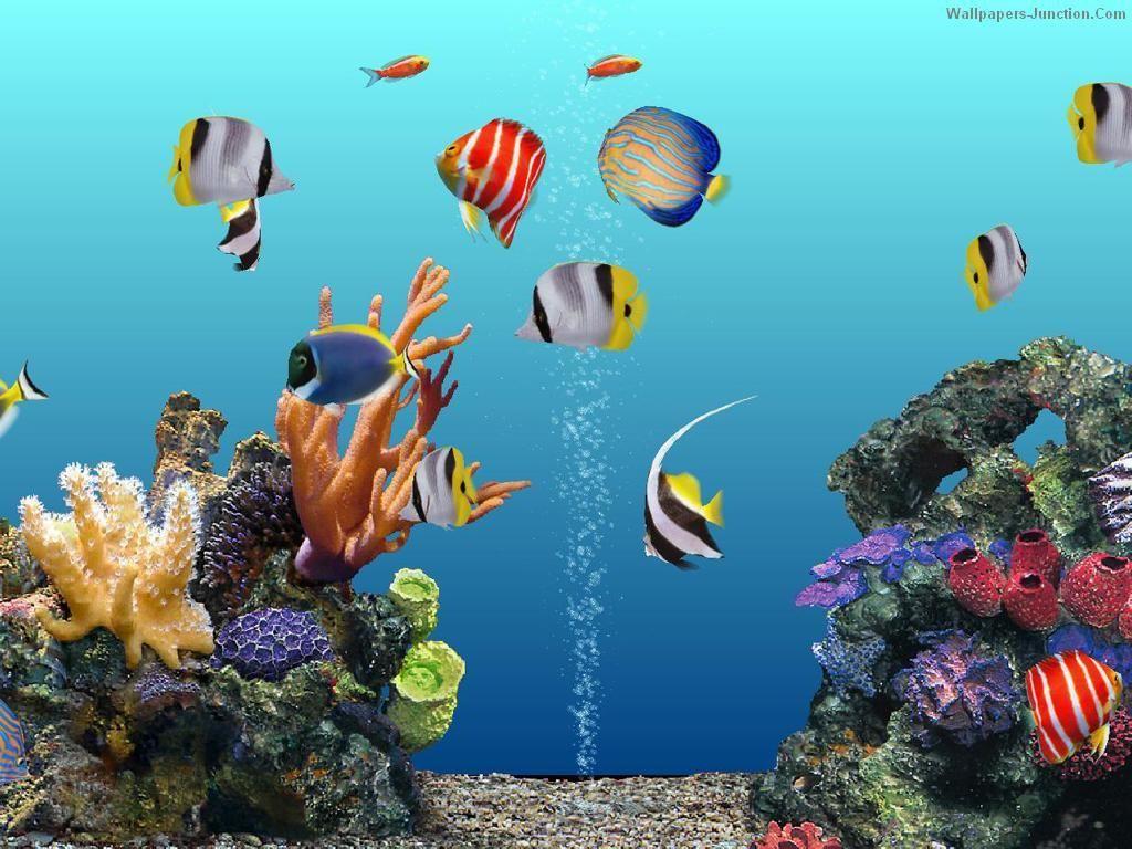 Free 3d Aquarium Wallpaper Wallpaper Aquarium Screensaver Aquarium