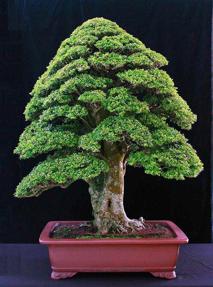 Bonsai image by Richard Brownell | Bonsai tree, Bonsai art ...