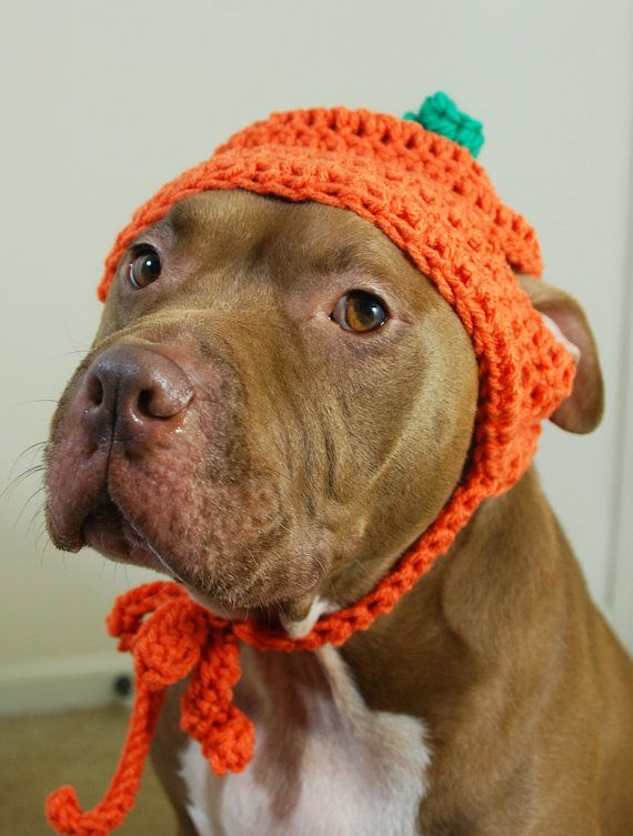 Pumpkin Dog Hat for Large Dogs Crochet by courtanai on Etsy