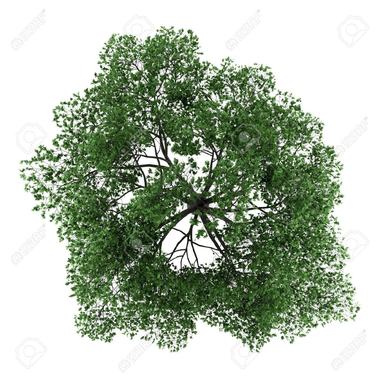 Tree Top View Psd Free Download