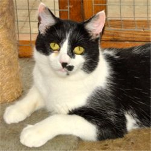 Tyler At Cats Protection Chatteris Cat Adoption Cats Feline