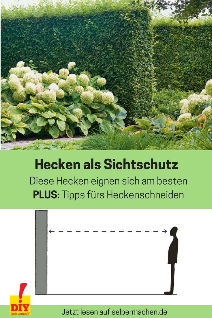 Sichtschutz Mit Pflanzen Garten Hecken Hecke Immergrune Hecke