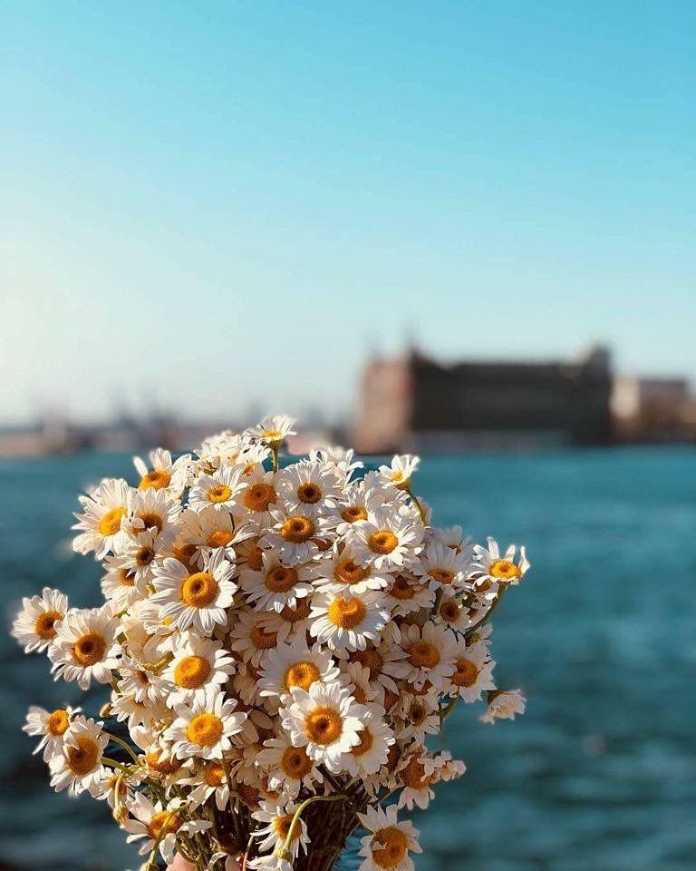 أقحوان Photography Inspiration Portrait Daisy Love Beautiful Pictures