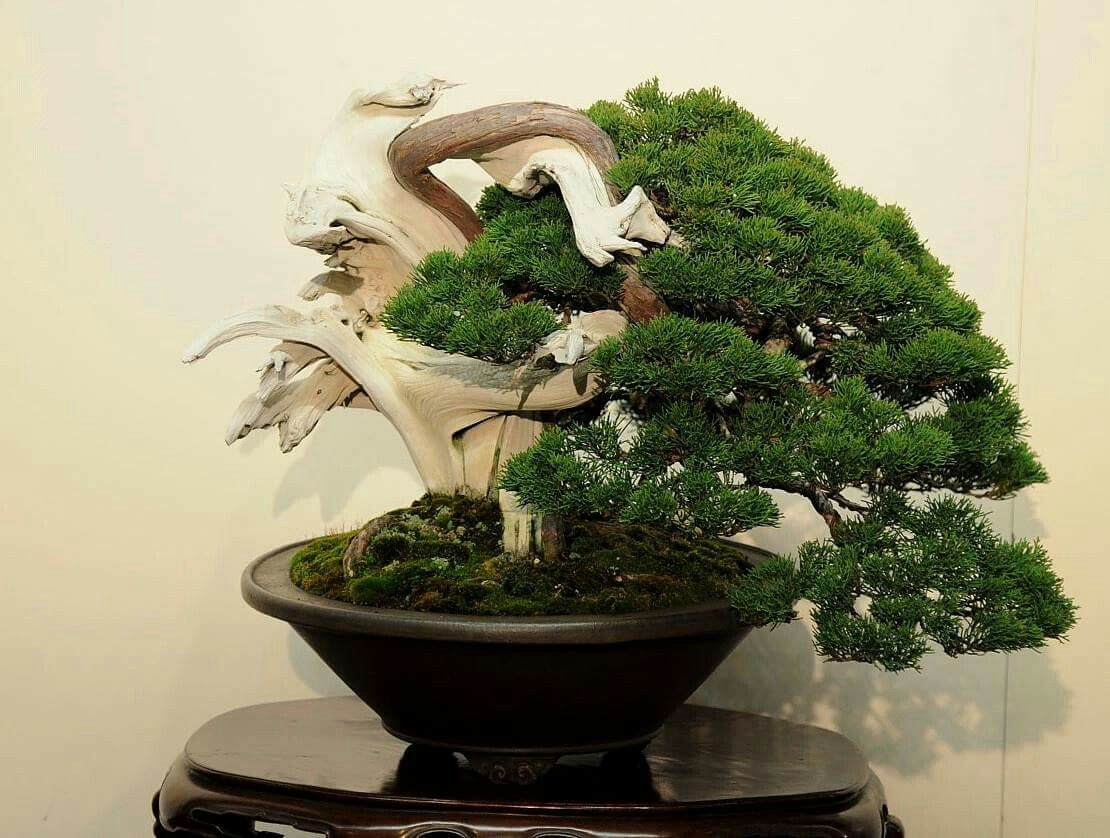 Pin by Bagus Wijaya on Bonsai.insp2 Bonsai tree