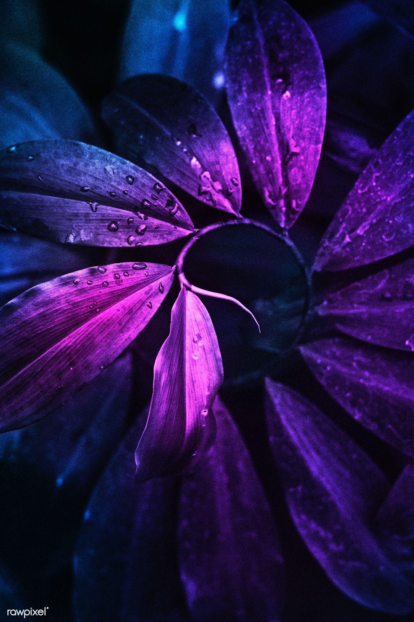 Download premium image of Neon tropical jungle foliage ...