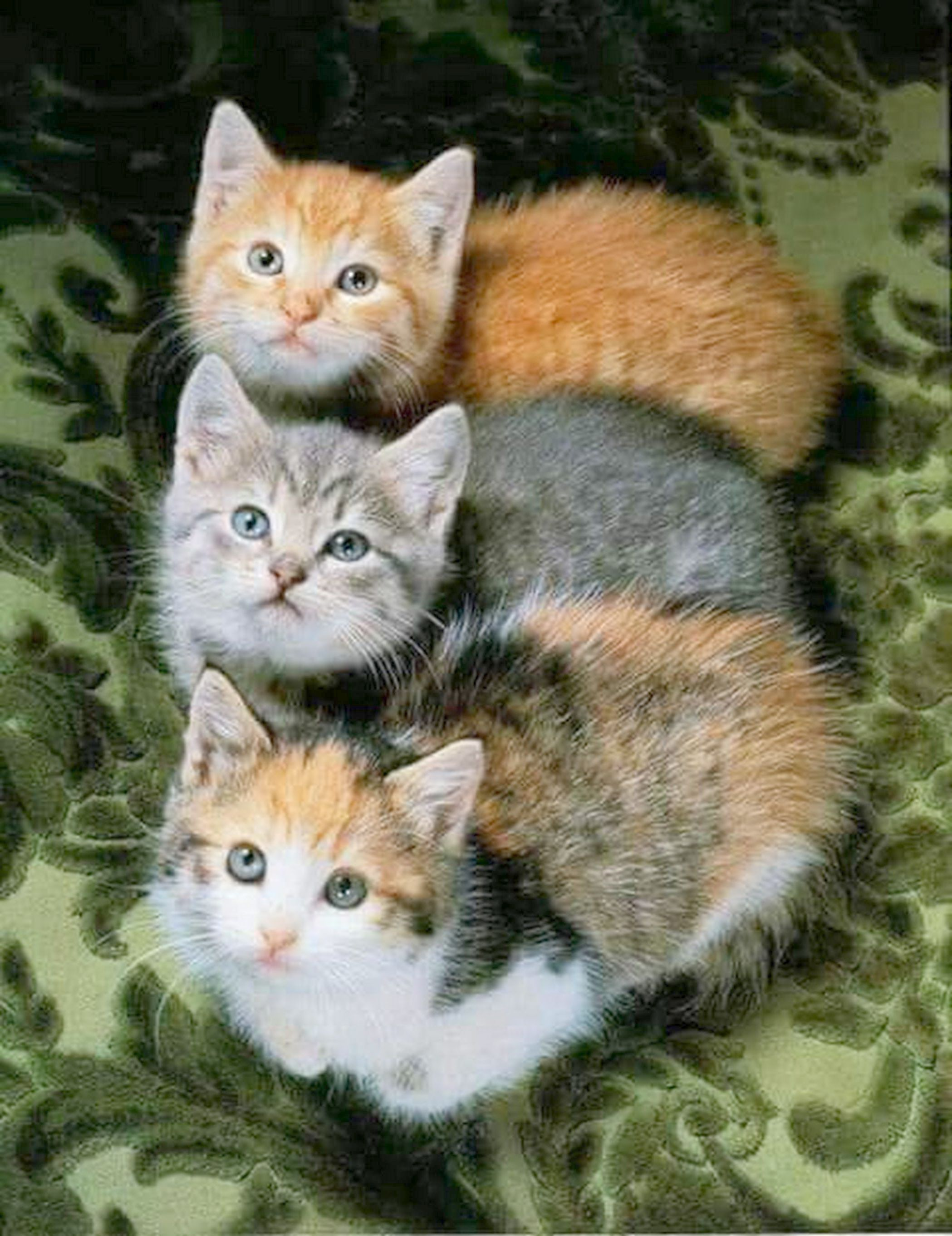 Cats And Kittens London Cats And Kittens Care Cute Cats Kittens Cutest Beautiful Cats